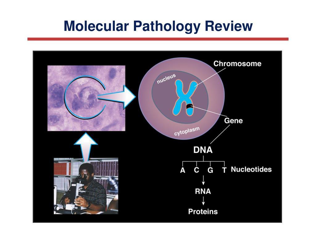 Molecular Pathology Review