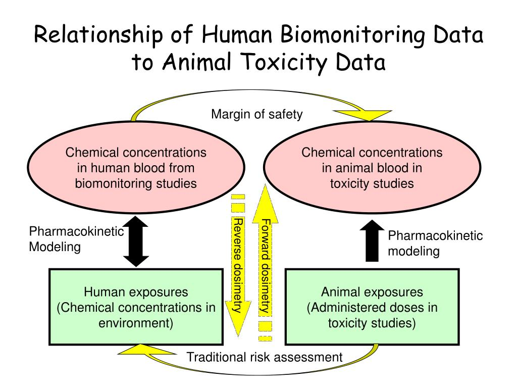 Relationship of Human Biomonitoring Data to Animal Toxicity Data