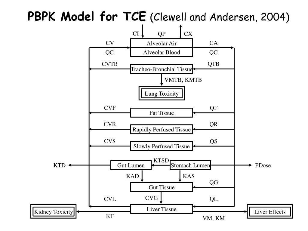 PBPK Model for TCE