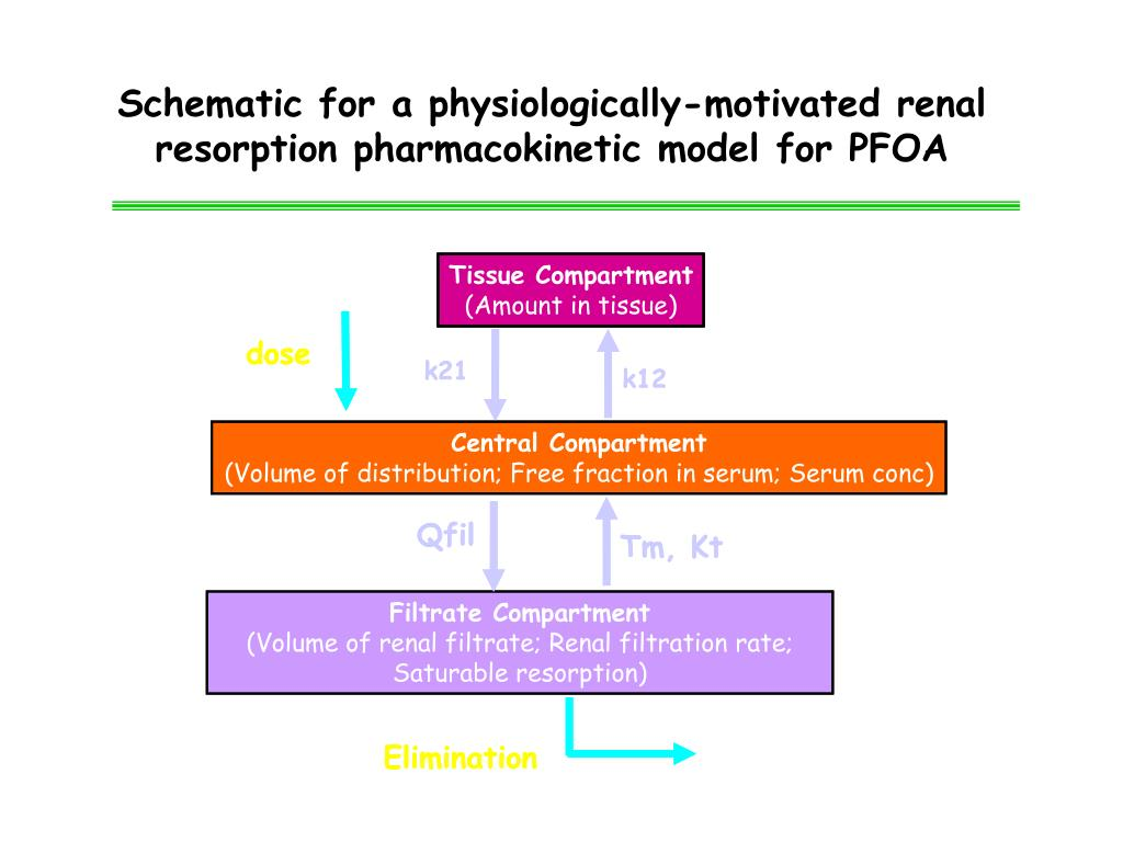 Schematic for a physiologically-motivated renal resorption pharmacokinetic model for PFOA