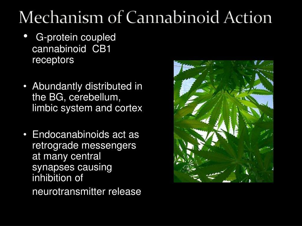 G-protein coupled cannabinoid  CB1 receptors