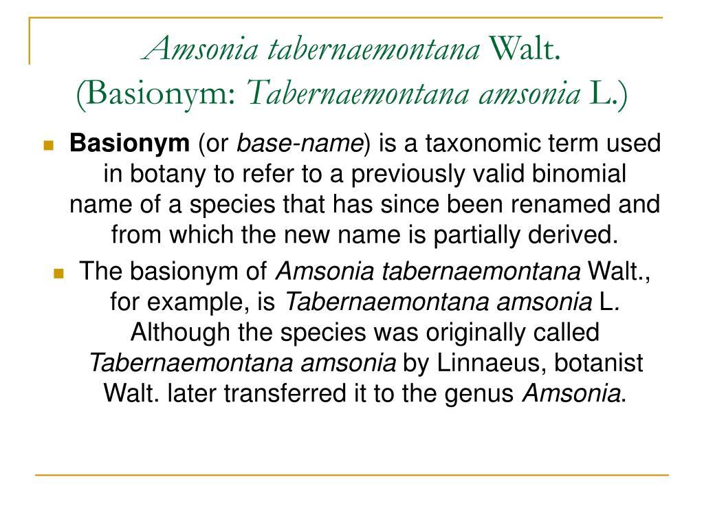Amsonia tabernaemontana