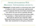 amsonia tabernaemontana walt basionym tabernaemontana amsonia l