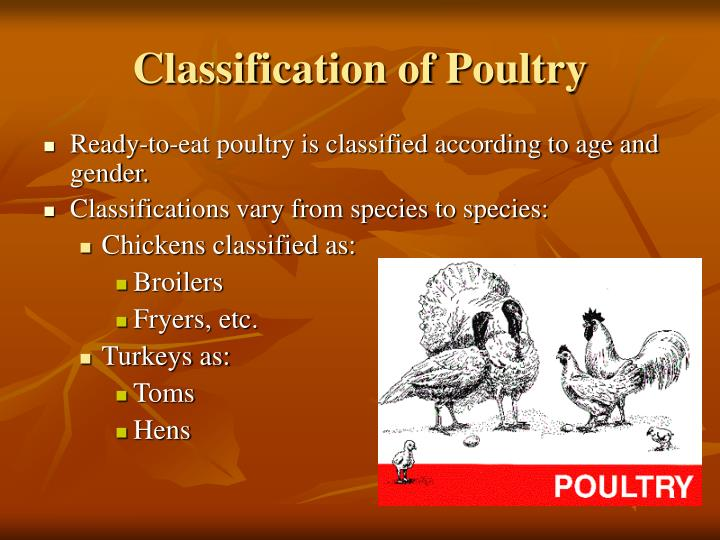 Classification of Poultry