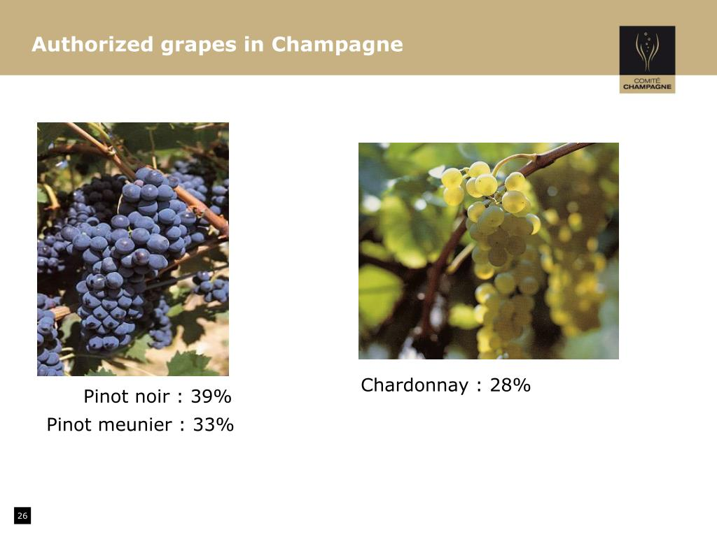 Authorized grapes in Champagne