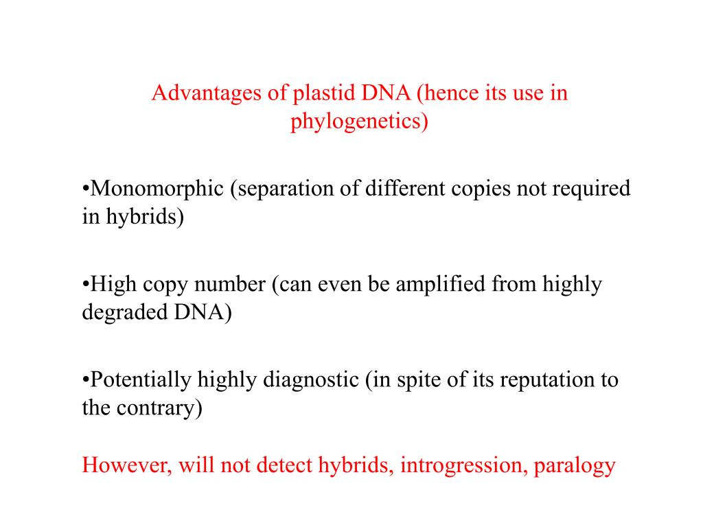 Advantages of plastid DNA (hence its use in phylogenetics)