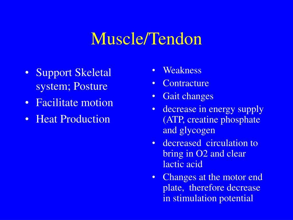 Support Skeletal system; Posture