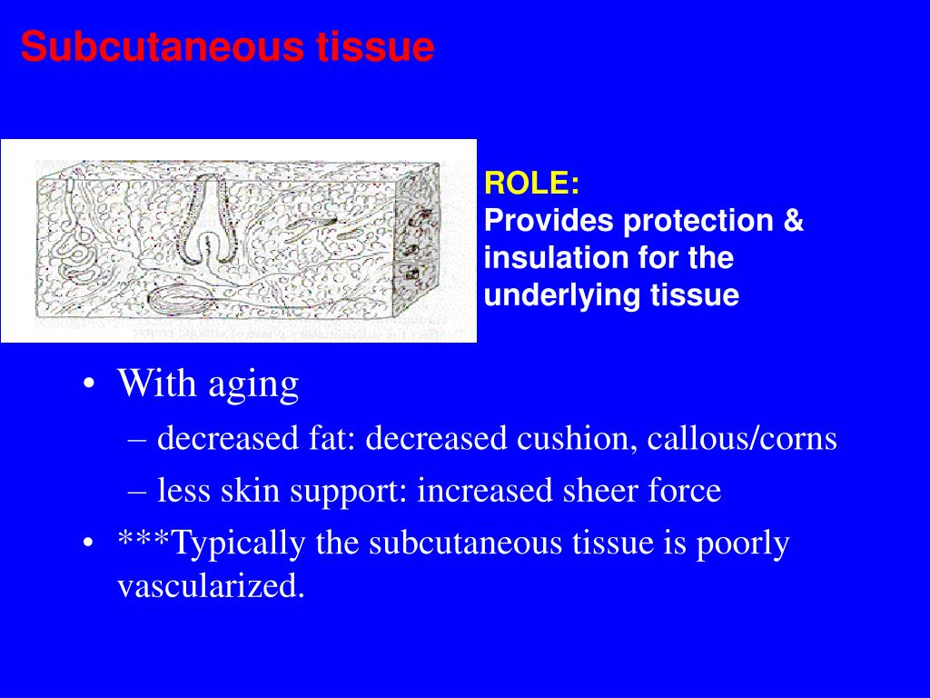 Subcutaneous tissue
