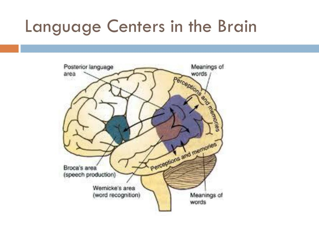 Language Centers in the Brain