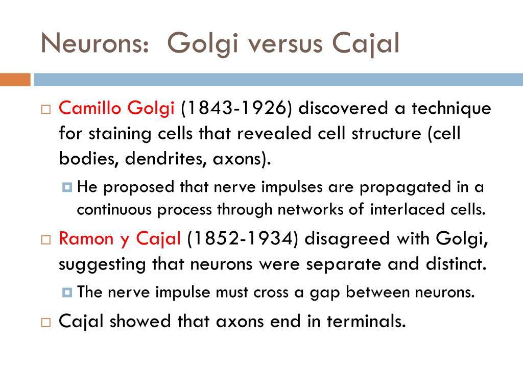 Neurons:  Golgi versus Cajal