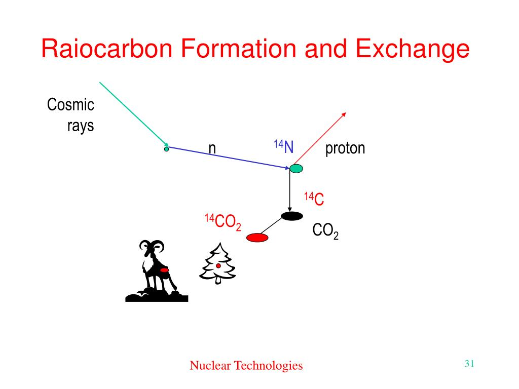 Raiocarbon Formation and Exchange
