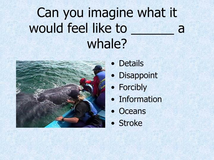 Can you imagine what it would feel like to ______ a whale?
