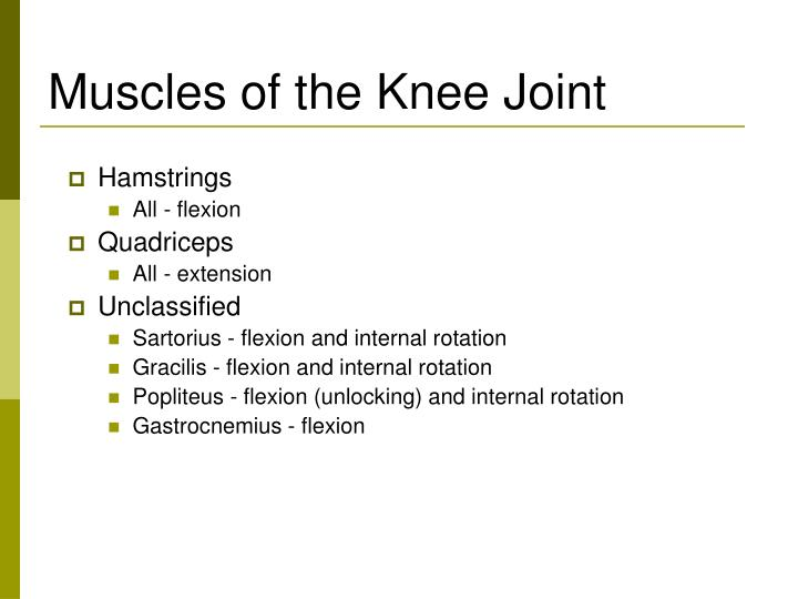 Muscles of the knee joint l.jpg