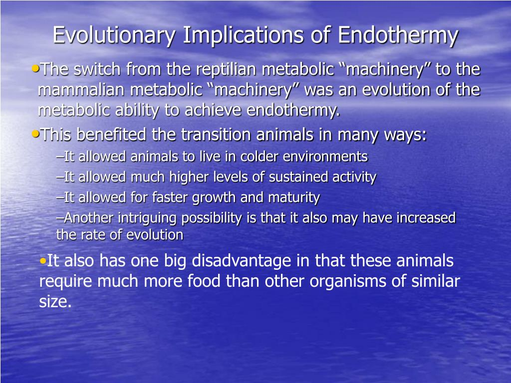 Evolutionary Implications of Endothermy