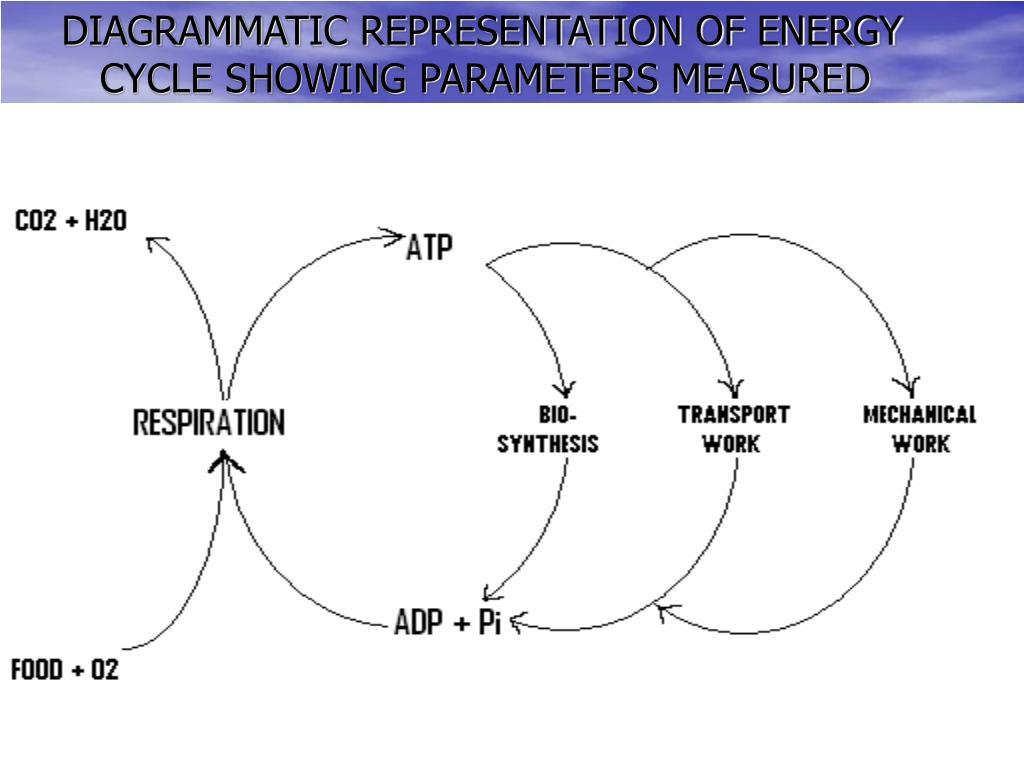 DIAGRAMMATIC REPRESENTATION OF ENERGY CYCLE SHOWING PARAMETERS MEASURED