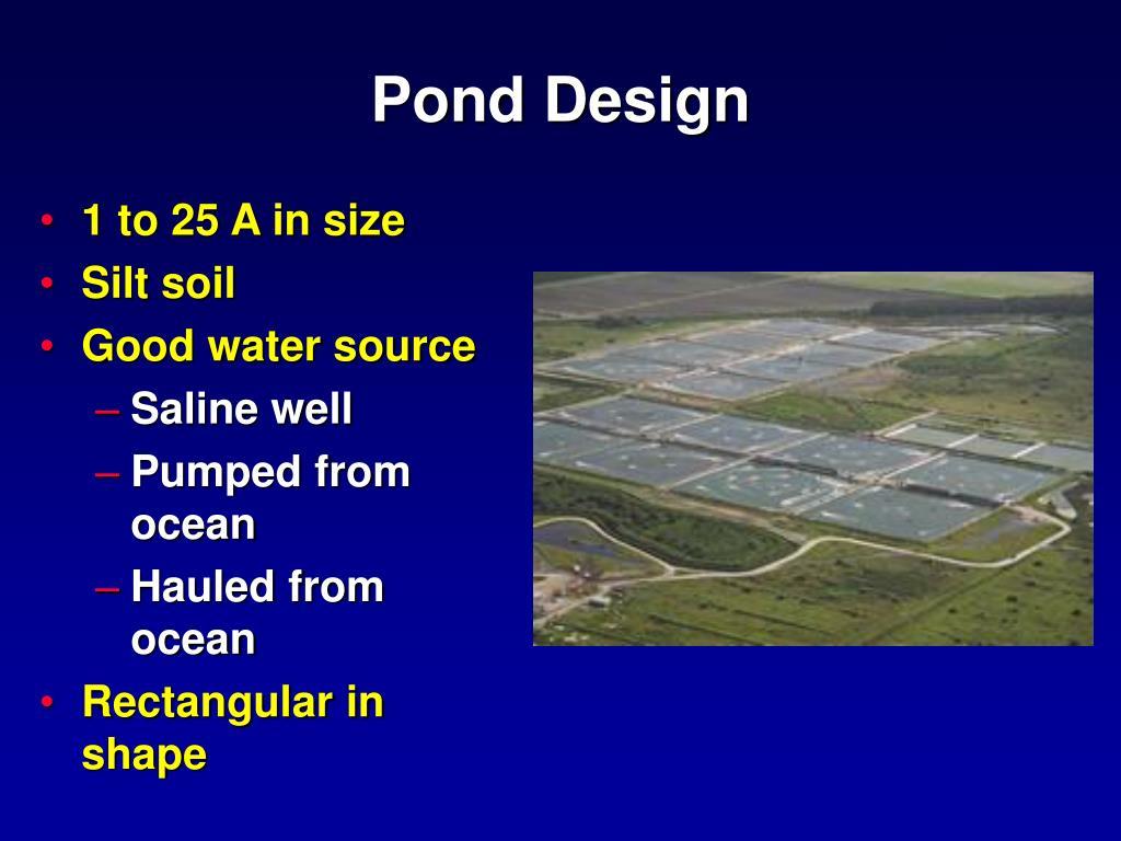 Ppt shrimp prawn crayfish aquaculture powerpoint for Design of farm pond ppt