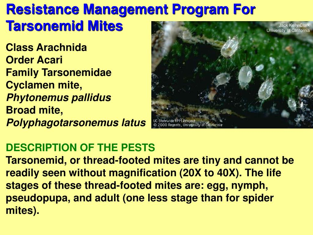Resistance Management Program For Tarsonemid Mites