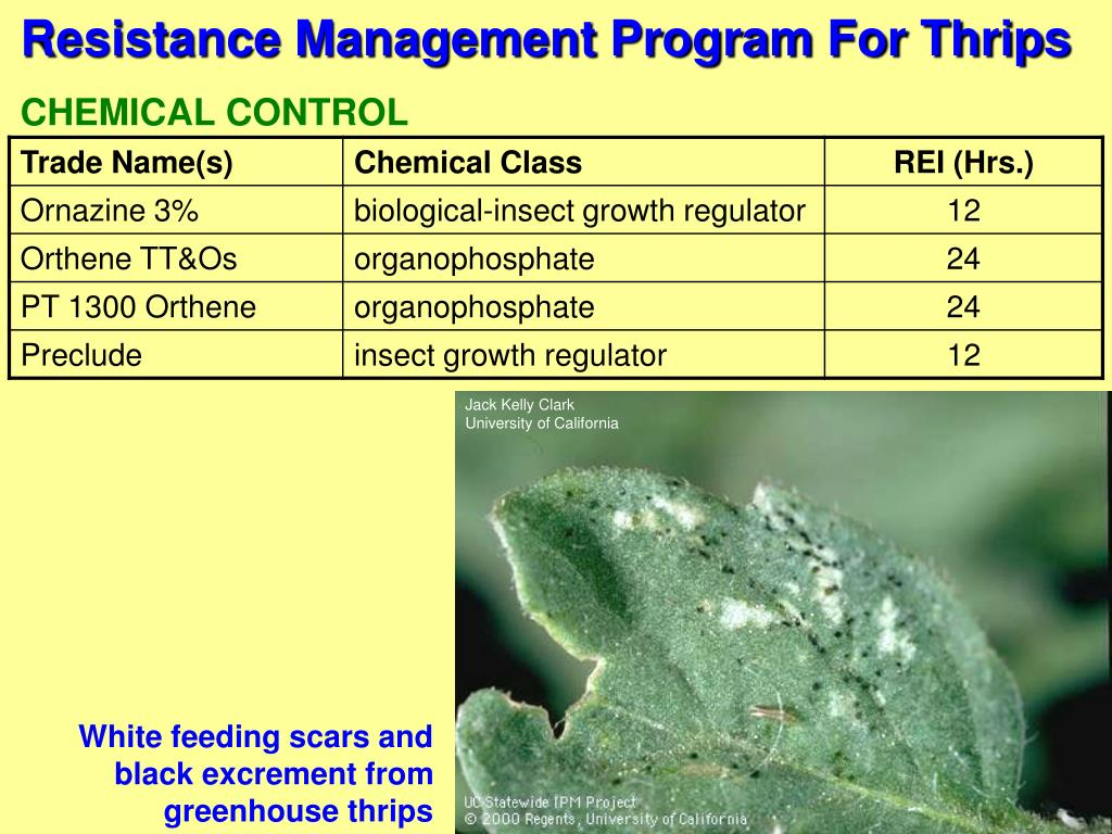Resistance Management Program For Thrips