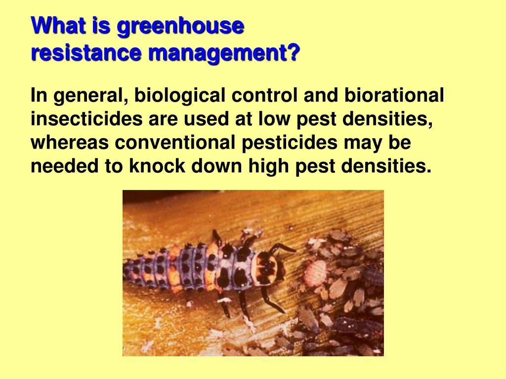 What is greenhouse