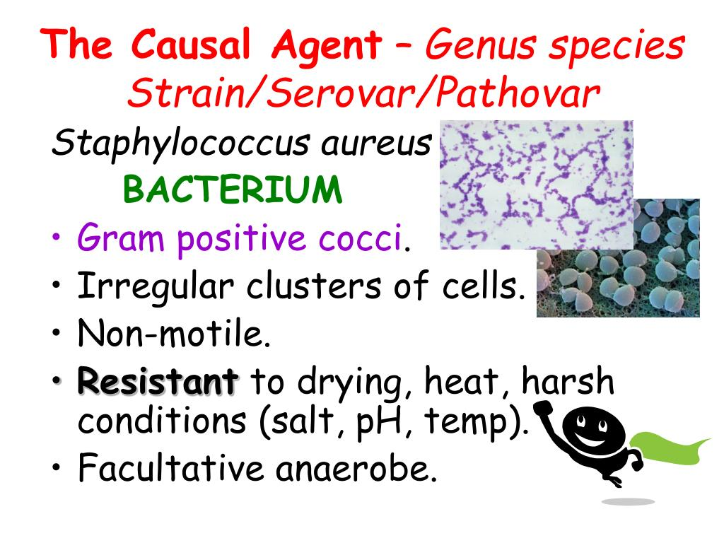 The Causal Agent