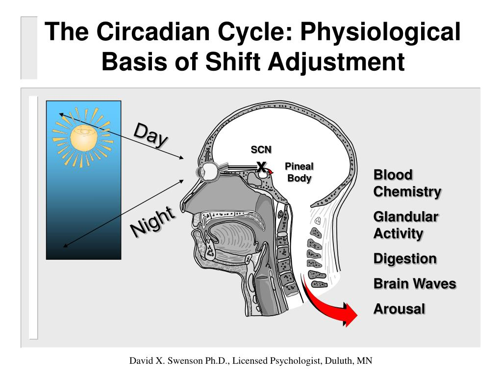 The Circadian Cycle: Physiological Basis of Shift Adjustment