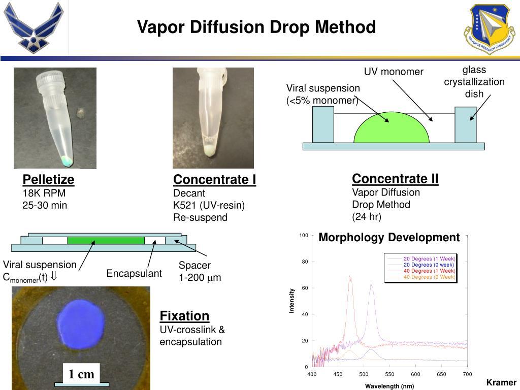 Morphology Development