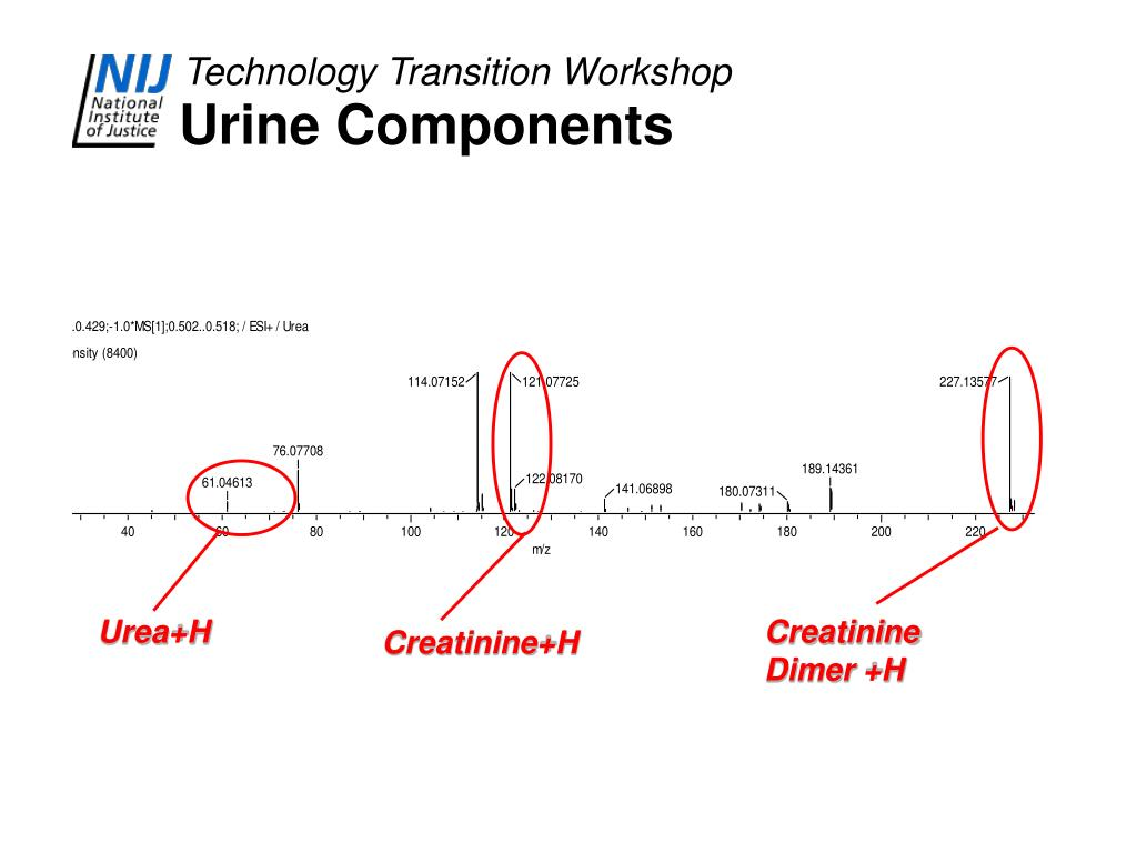 Urine Components