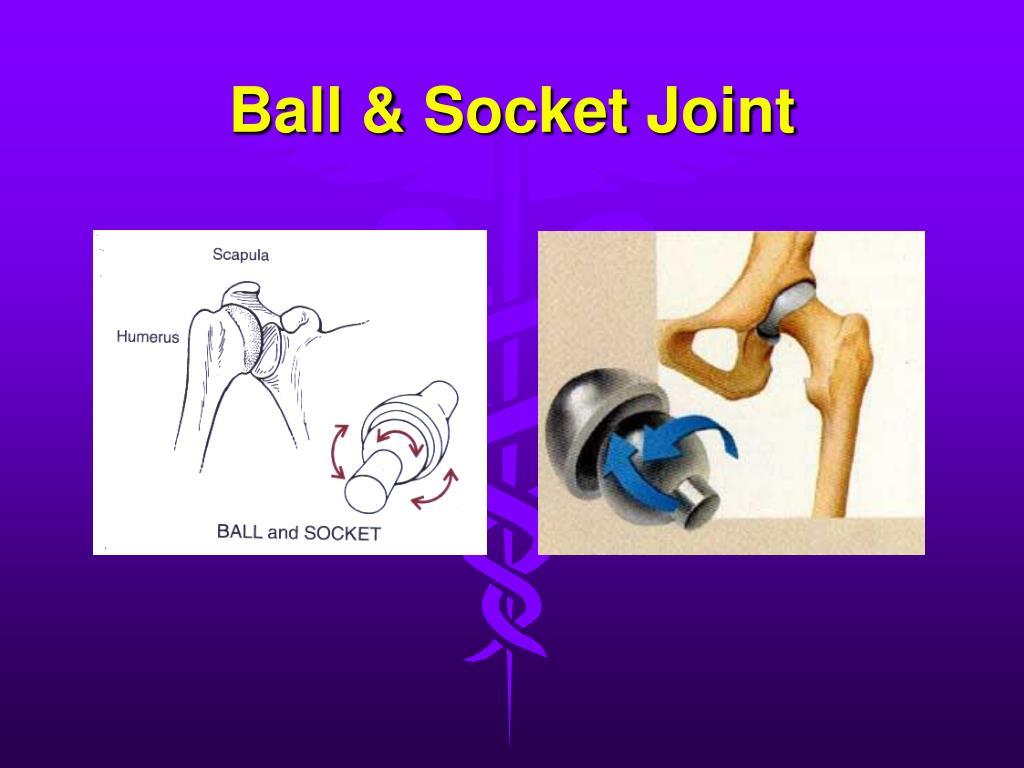 Ball & Socket Joint
