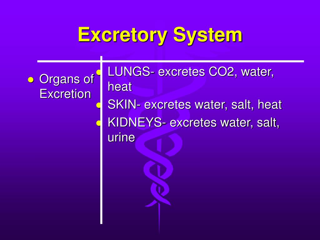 Organs of Excretion