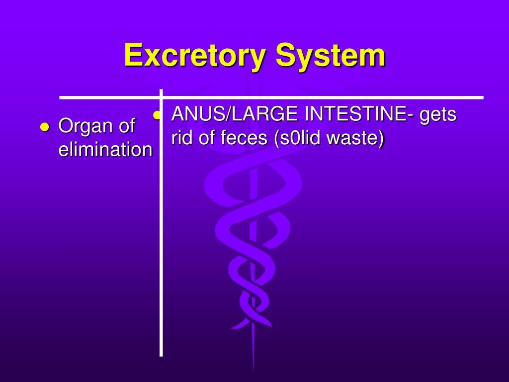 Organ of elimination