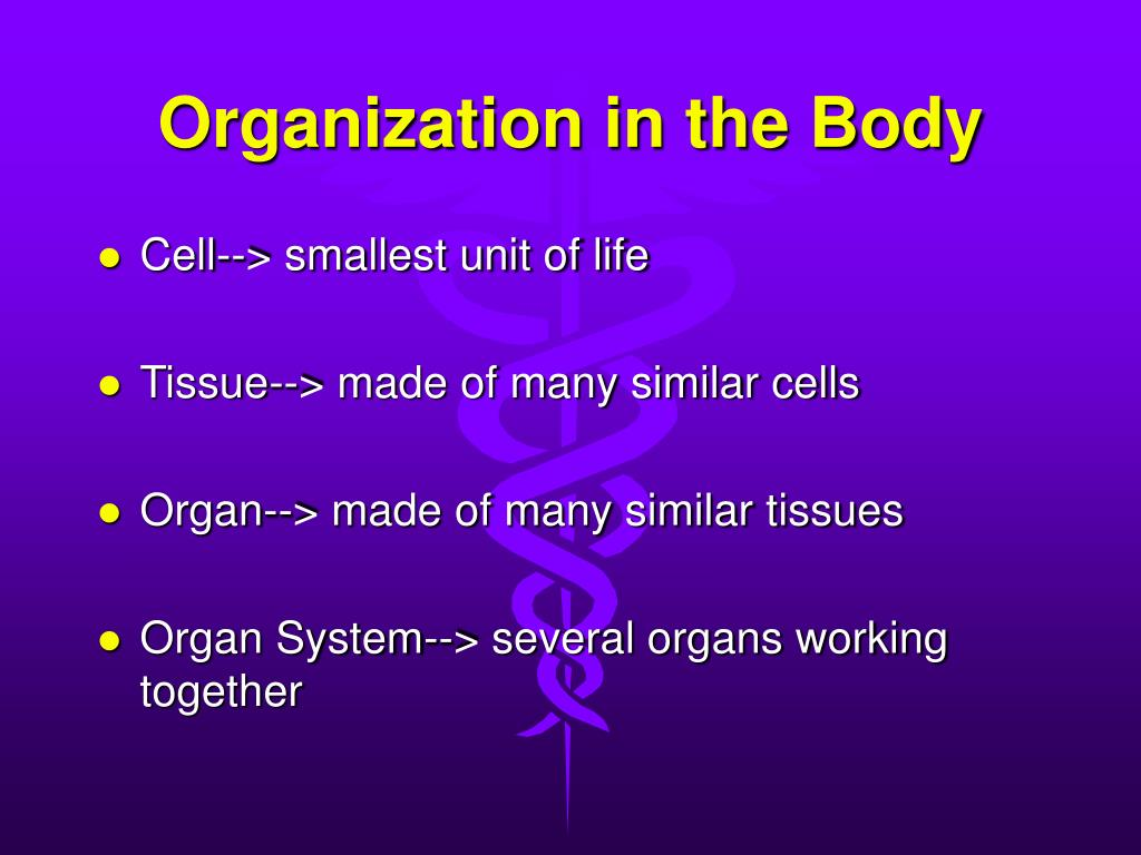 Organization in the Body