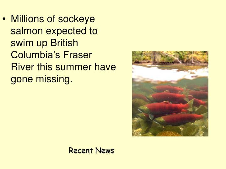 Millions of sockeye salmon expected to swim up British Columbia's Fraser River this summer have gone missing.