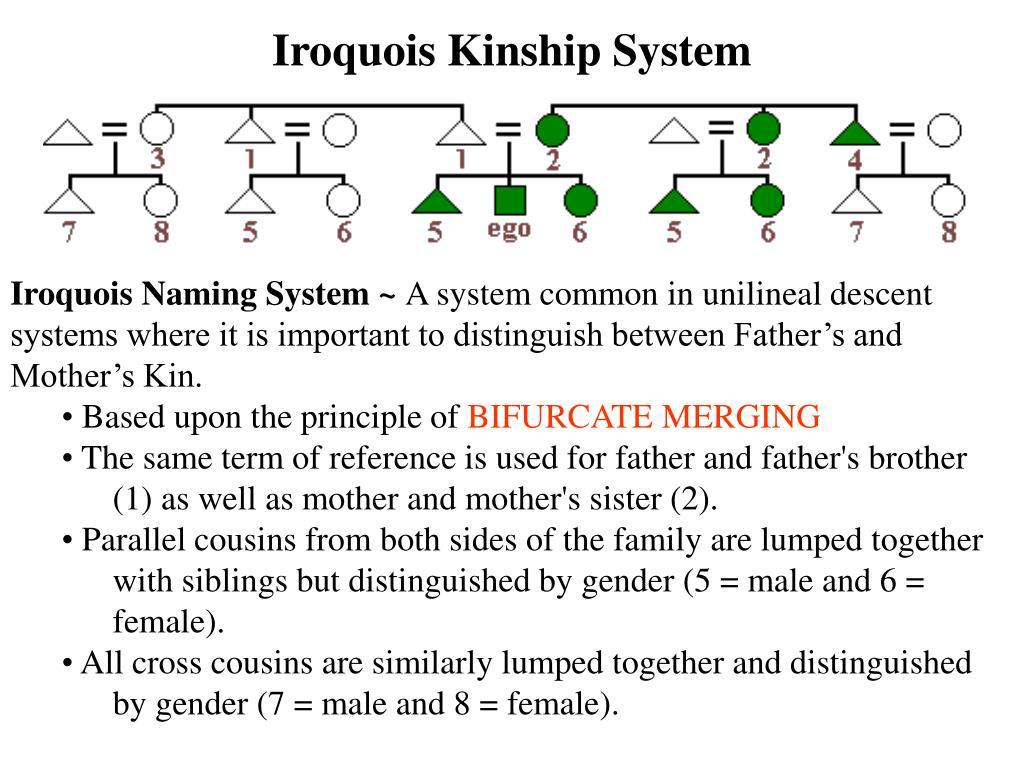 Iroquois Kinship System