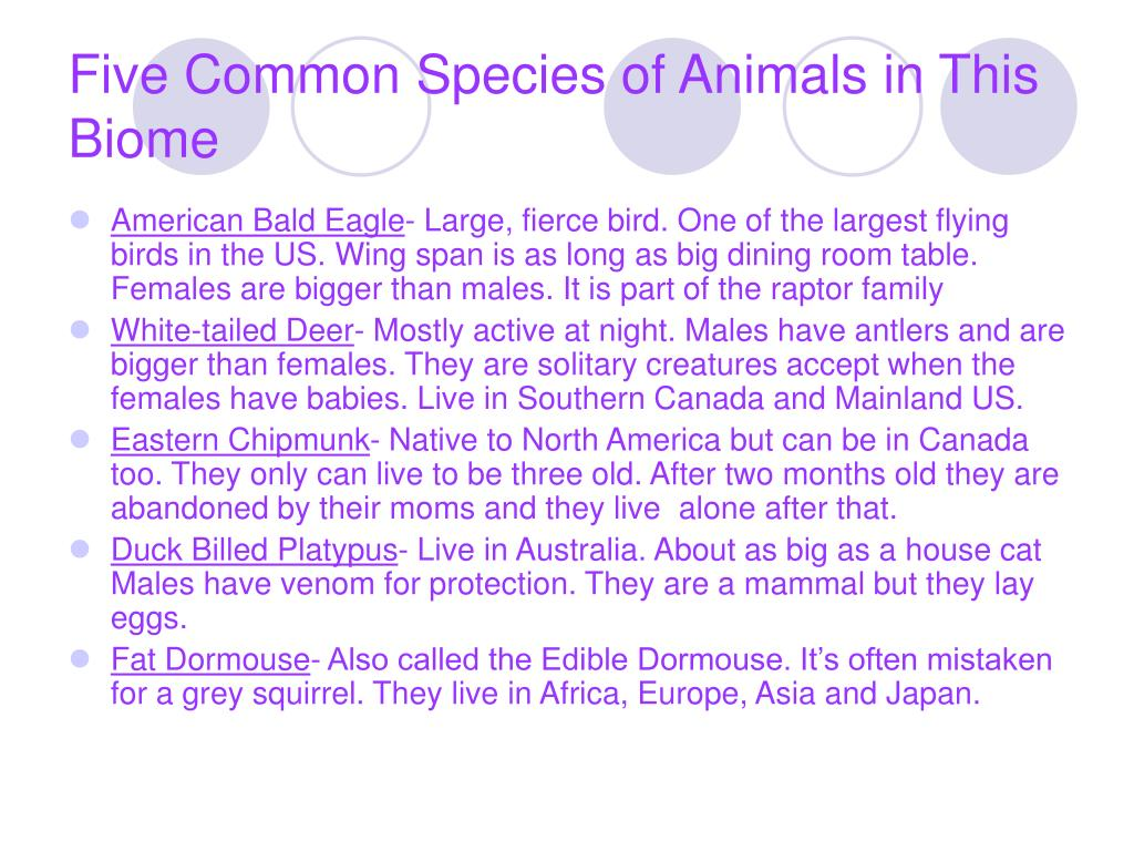 Five Common Species of Animals in This Biome