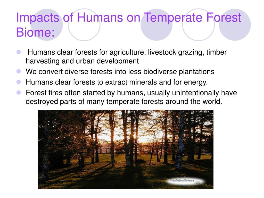 Impacts of Humans on Temperate Forest Biome: