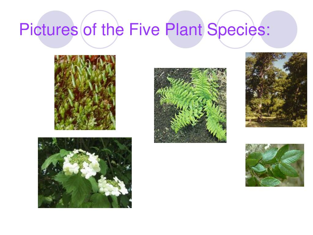 Pictures of the Five Plant Species: