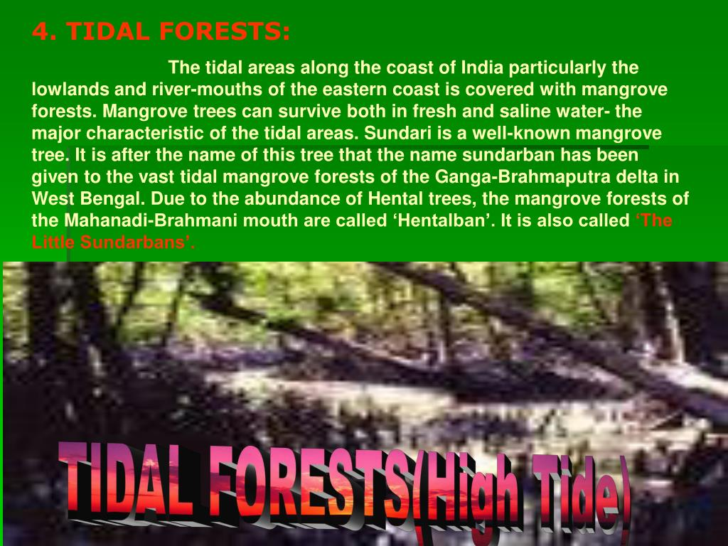 4. TIDAL FORESTS:
