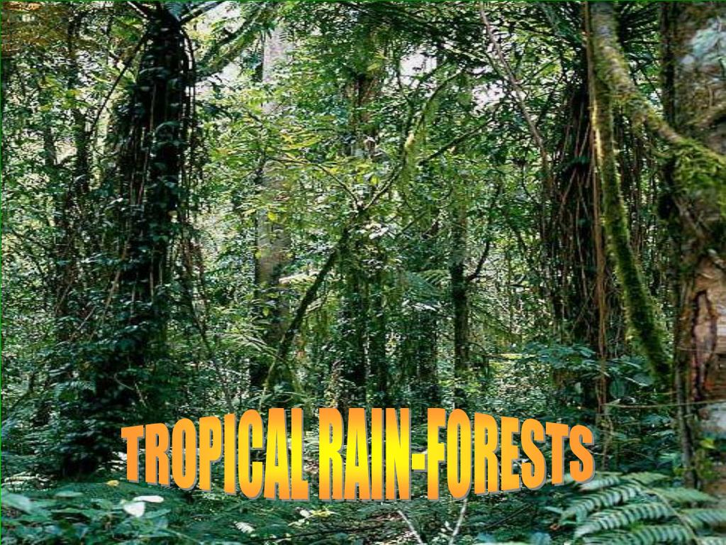 TROPICAL RAIN-FORESTS