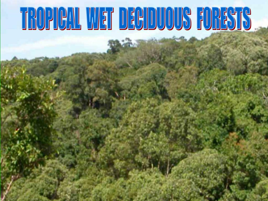 TROPICAL  WET  DECIDUOUS  FORESTS