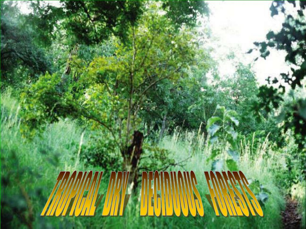 TROPICAL   DRY      DECIDUOUS    FORESTS