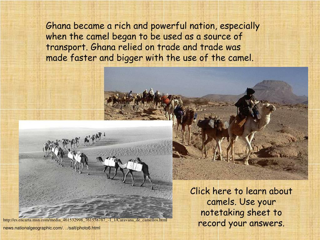 Ghana became a rich and powerful nation, especially when the camel began to be used as a source of transport. Ghana relied on trade and trade was made faster and bigger with the use of the camel.
