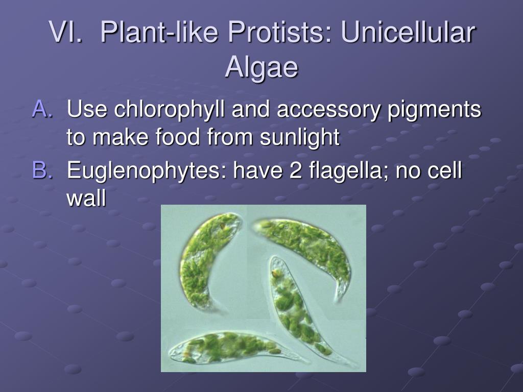VI.  Plant-like Protists: Unicellular Algae