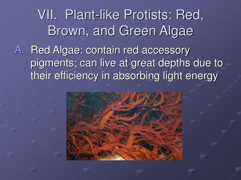 VII.  Plant-like Protists: Red, Brown, and Green Algae