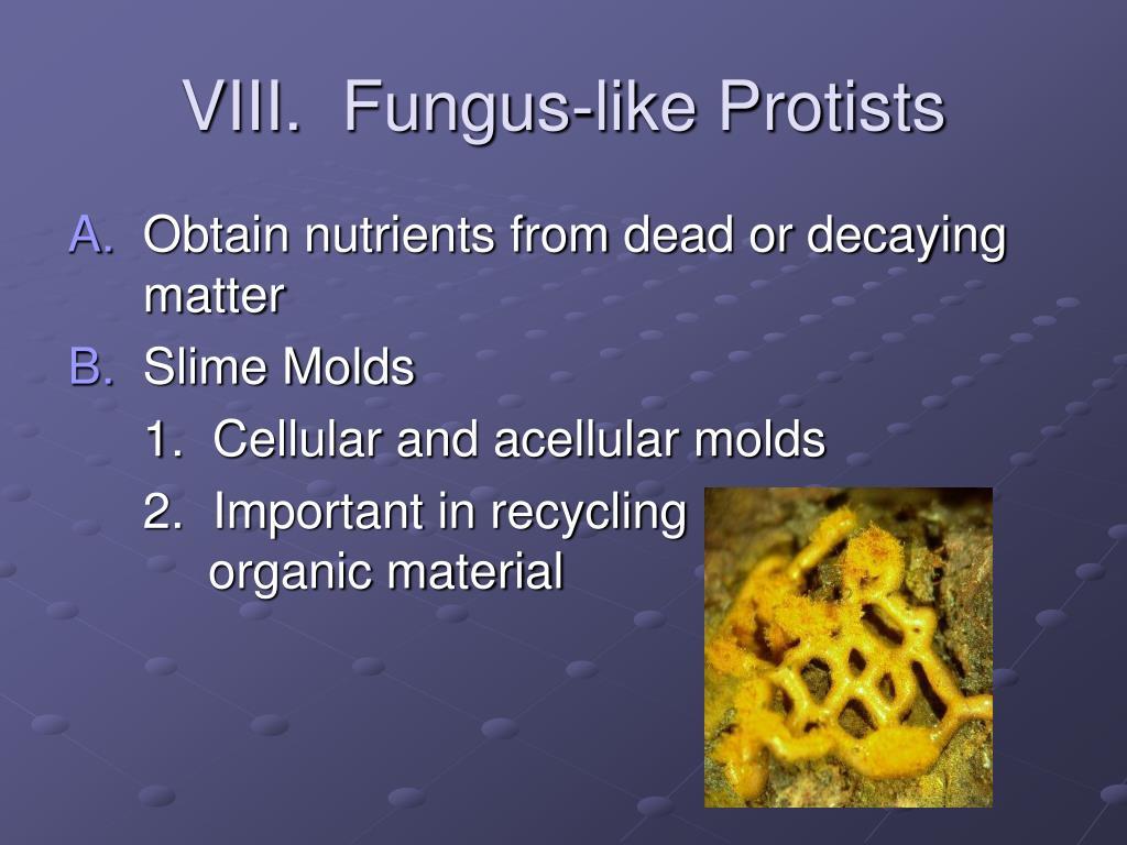 VIII.  Fungus-like Protists