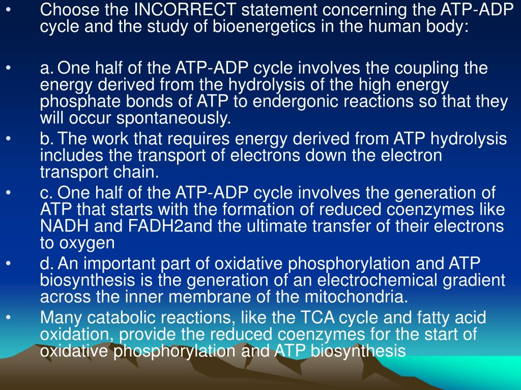 Choose the INCORRECT statement concerning the ATP-ADP cycle and the study of bioenergetics in the human body: