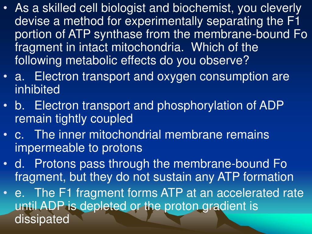 As a skilled cell biologist and biochemist, you cleverly devise a method for experimentally separating the F1 portion of ATP synthase from the membrane-bound Fo fragment in intact mitochondria.  Which of the following metabolic effects do you observe?