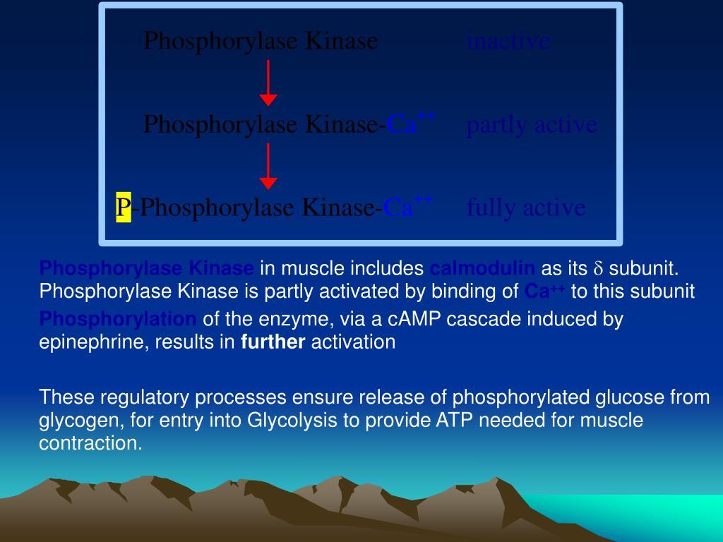 Phosphorylase Kinase