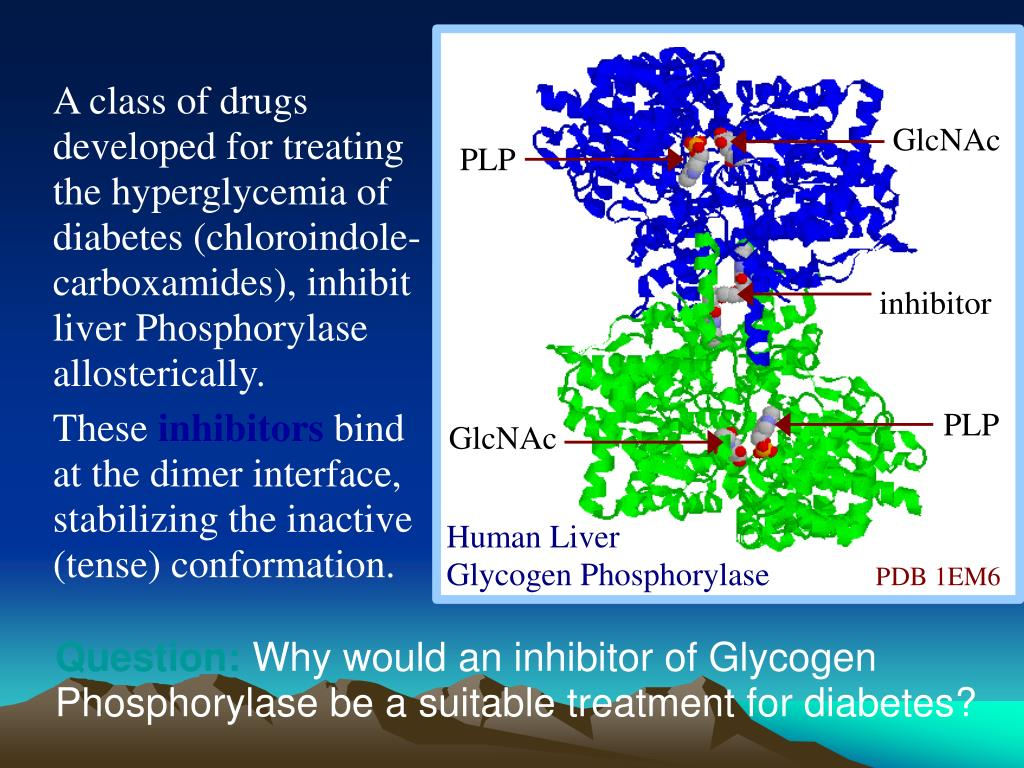 A class of drugs developed for treating the hyperglycemia of diabetes (chloroindole-carboxamides), inhibit liver Phosphorylase allosterically.