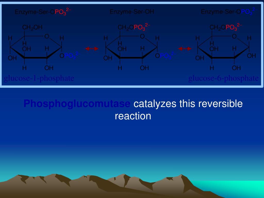 Phosphoglucomutase