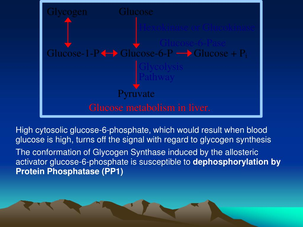 High cytosolic glucose-6-phosphate, which would result when blood glucose is high, turns off the signal with regard to glycogen synthesis